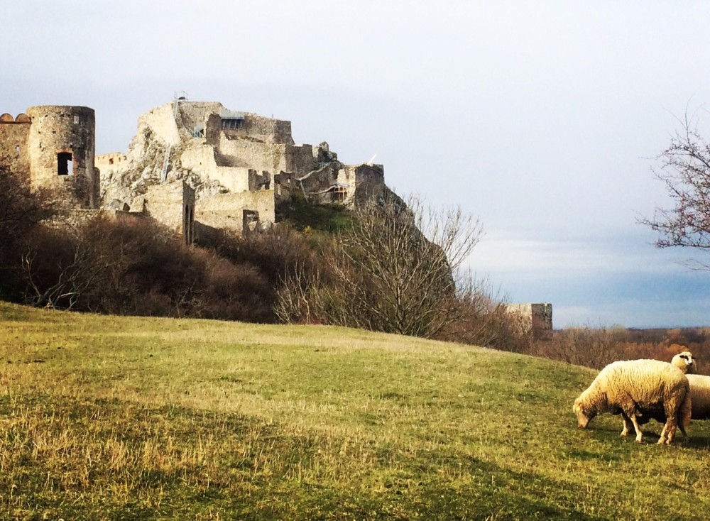 Devin Castle and Sheep